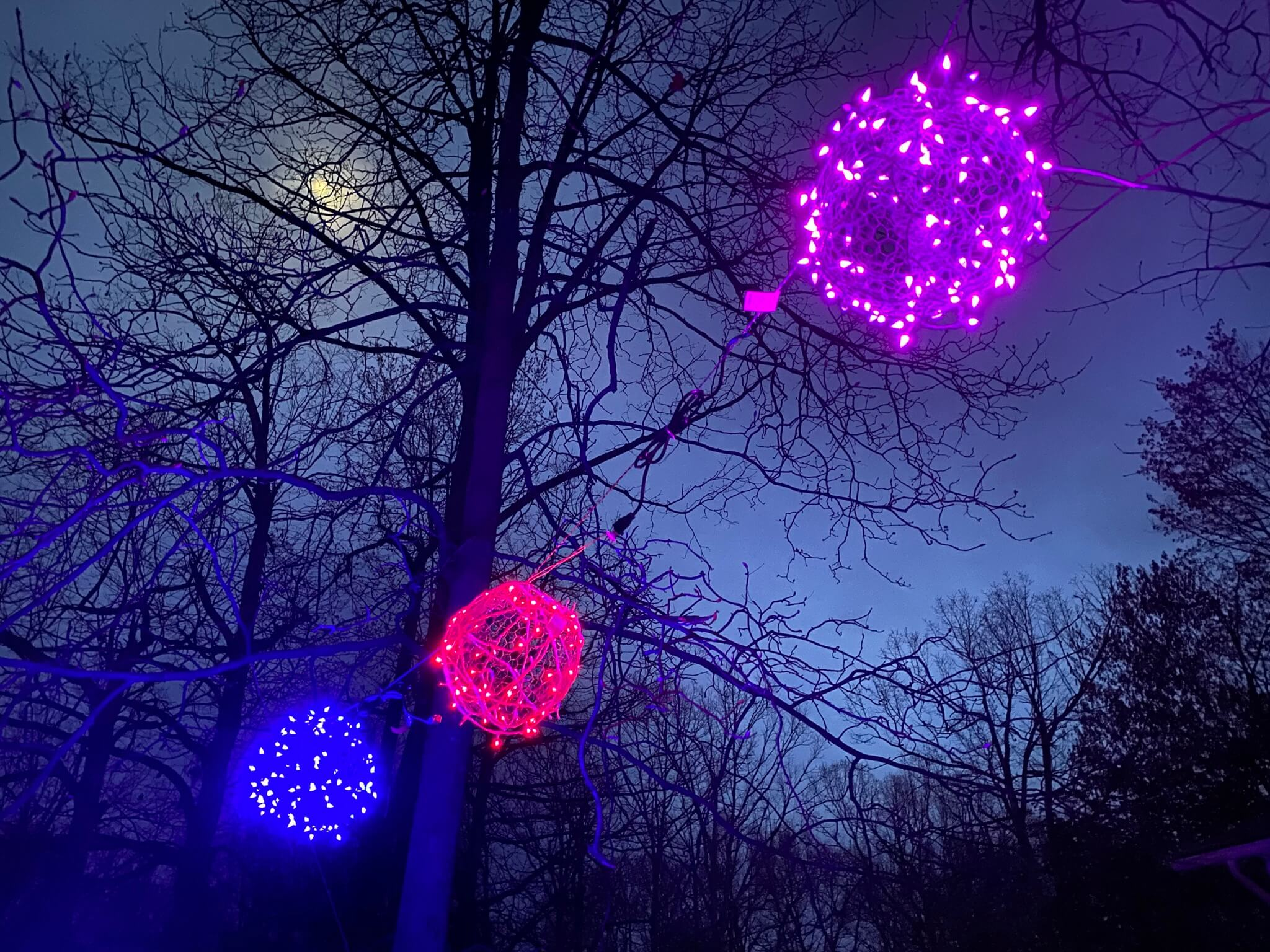Lights in a tree